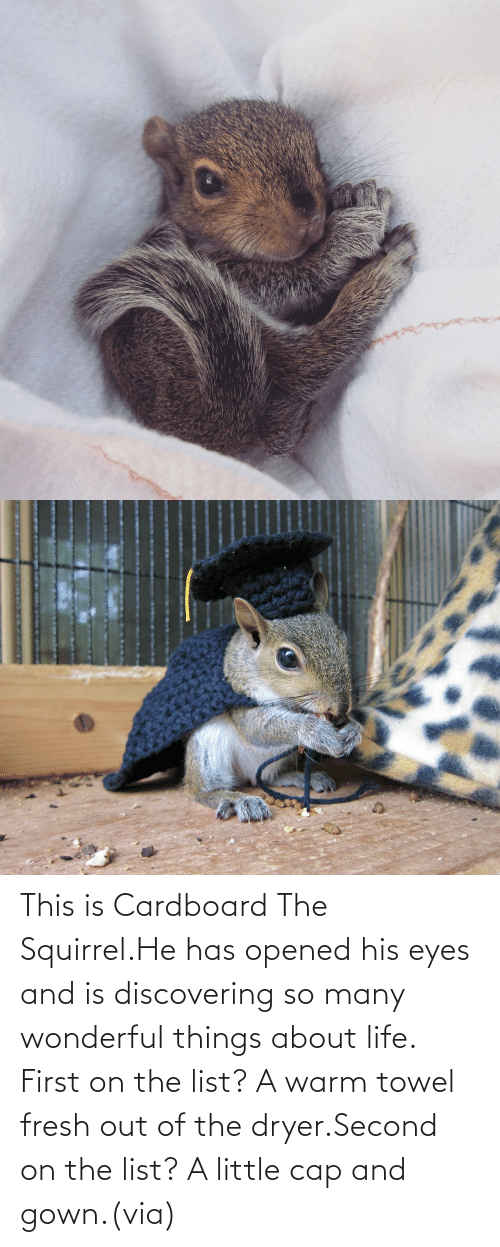 Dryer: This is Cardboard The Squirrel.He has opened his eyes and is discovering so many wonderful things about life. First on the list? A warm towel fresh out of the dryer.Second on the list? A little cap and gown.(via)