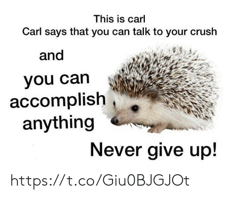 Crush, Memes, and Never: This is carl  Carl says that you can talk to your crush  and  you can  accomplish  anything  Never give up! https://t.co/Giu0BJGJOt