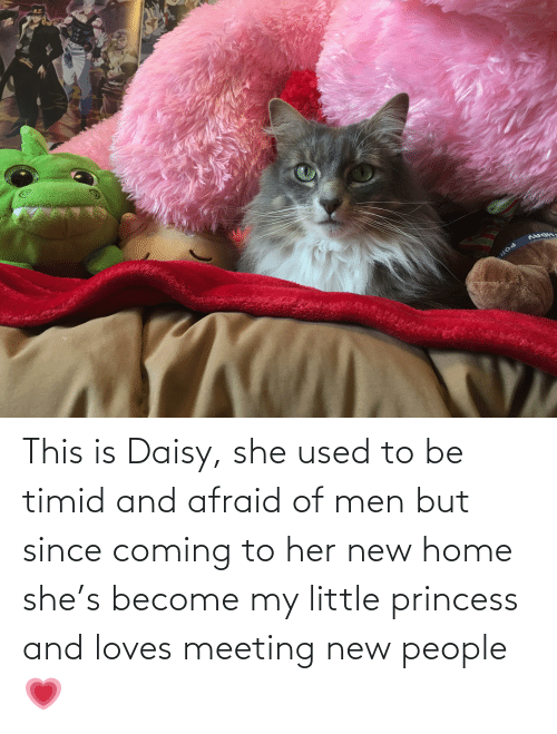New People: This is Daisy, she used to be timid and afraid of men but since coming to her new home she's become my little princess and loves meeting new people💗