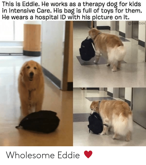 Hospital, Kids, and Toys: This is Eddie. He works as a therapy dog for kids  in Intensive Care. His bag is full of toys for them.  He wears a hospital ID with his picture on it.  box Wholesome Eddie ♥️