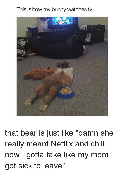 "Netflix And Chilling: This is how my bunny watches tv that bear is just like ""damn she really meant Netflix and chill now I gotta fake like my mom got sick to leave"""