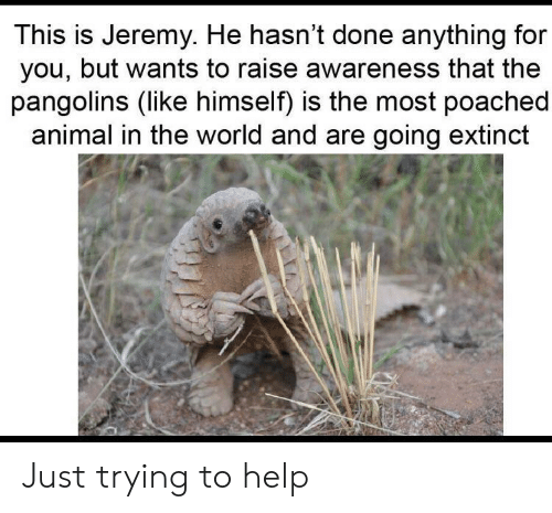 Animal, Help, and World: This is Jeremy. He hasn't done anything for  you, but wants to raise awareness that the  pangolins (like himself) is the most poached  animal in the world and are going extinct Just trying to help