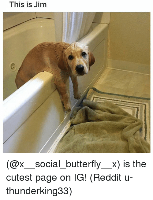 Memes, Reddit, and Butterfly: This is Jim (@x__social_butterfly__x) is the cutest page on IG! (Reddit u-thunderking33)