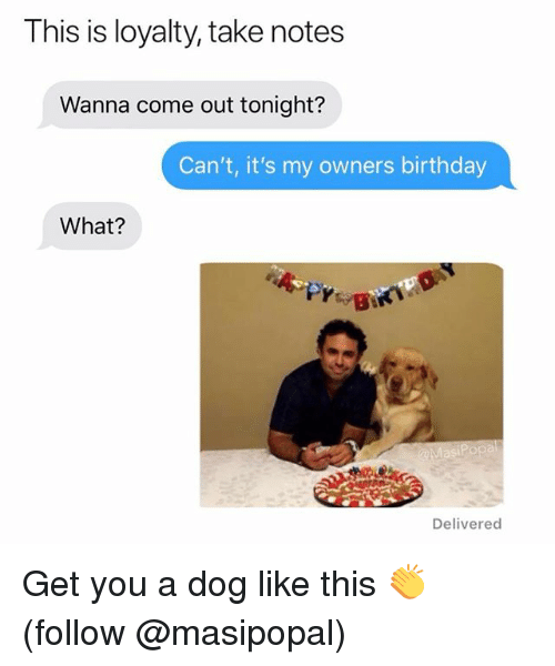 Birthday, Funny, and Dog: This is loyalty, take notes  Wanna come out tonight?  Can't, it's my owners birthday  What?  Delivered Get you a dog like this 👏 (follow @masipopal)