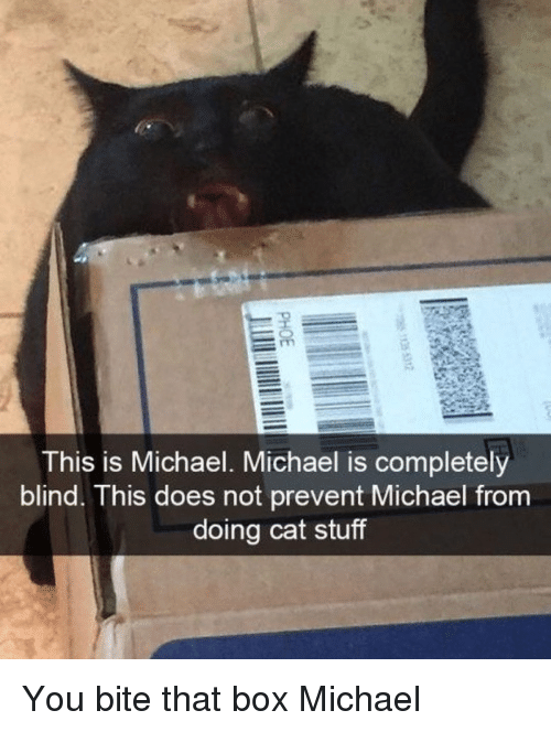 Michael, Stuff, and Cat: This is Michael. Michael is completely  blind. This does not prevent Michael from  doing cat stuff You bite that box Michael