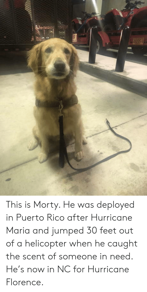 Hurricane, Puerto Rico, and Jumped: This is Morty. He was deployed in Puerto Rico after Hurricane Maria and jumped 30 feet out of a helicopter when he caught the scent of someone in need. He's now in NC for Hurricane Florence.