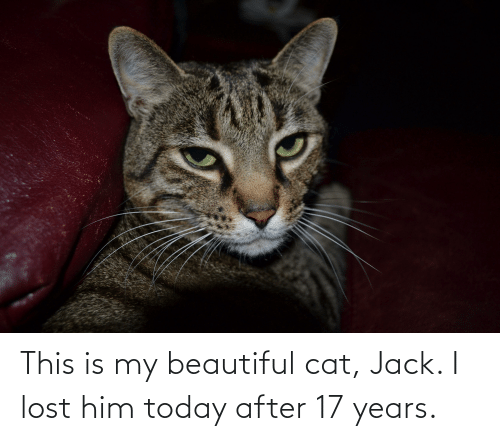 17 years: This is my beautiful cat, Jack. I lost him today after 17 years.