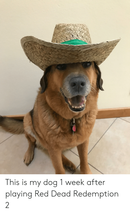 Red Dead Redemption, Red Dead, and Dog: This is my dog 1 week after playing Red Dead Redemption 2