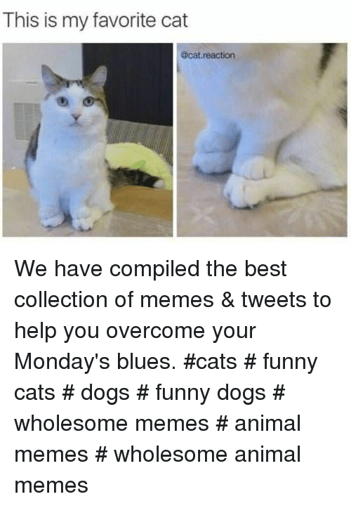 Cats, Dogs, and Funny: This is my favorite cat  @cat reaction We have compiled the best collection of memes & tweets to help you overcome your Monday's blues. #cats # funny cats # dogs # funny dogs # wholesome memes # animal memes # wholesome animal memes