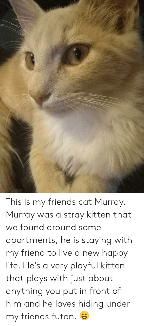 Friends, Life, and Happy: This is my friends cat Murray. Murray was a stray kitten that we found around some apartments, he is staying with my friend to live a new happy life. He's a very playful kitten that plays with just about anything you put in front of him and he loves hiding under my friends futon. 😀