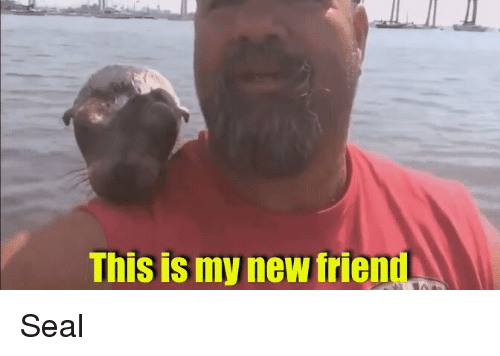 Seal, Friend, and New: This is my new friend Seal