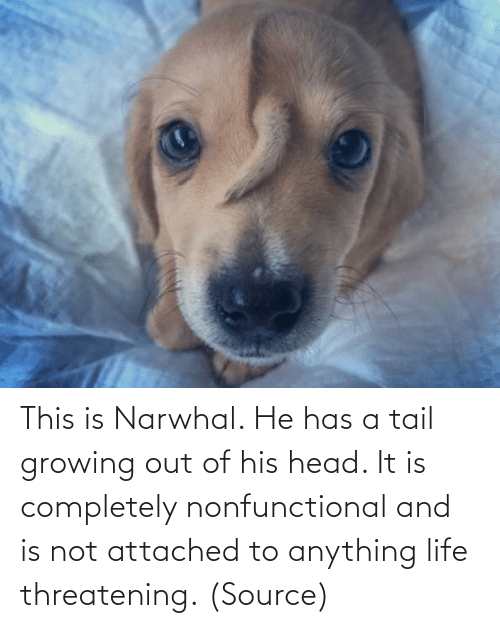 His: This is Narwhal. He has a tail growing out of his head. It is completely nonfunctional and is not attached to anything life threatening. (Source)