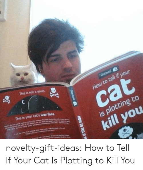Cats, Tumblr, and Blog: This is not a yeun  How to tell if your  This is your cats war face.  cat  is plotting to  kill you novelty-gift-ideas:  How to Tell If Your Cat Is Plotting to Kill You