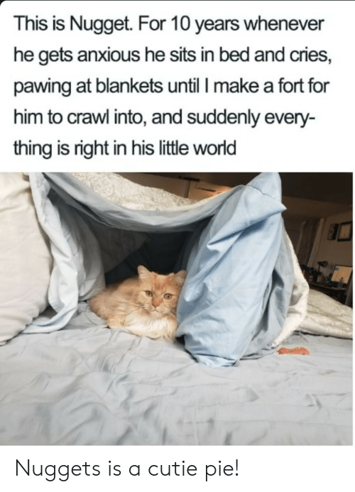 World, Crawl, and Make A: This is Nugget. For 10 years whenever  he gets anxious he sits in bed and cries,  pawing at blankets until I make a fort for  him to crawl into, and suddenly every-  thing is right in his little world Nuggets is a cutie pie!