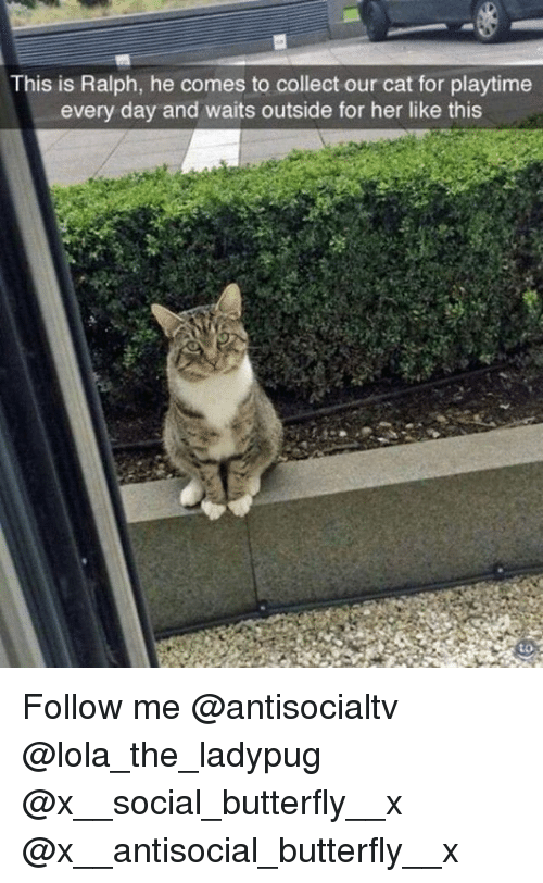 Memes, Butterfly, and Antisocial: This is Ralph, he comes to collect our cat for playtime  every day and waits outside for her like this Follow me @antisocialtv @lola_the_ladypug @x__social_butterfly__x @x__antisocial_butterfly__x