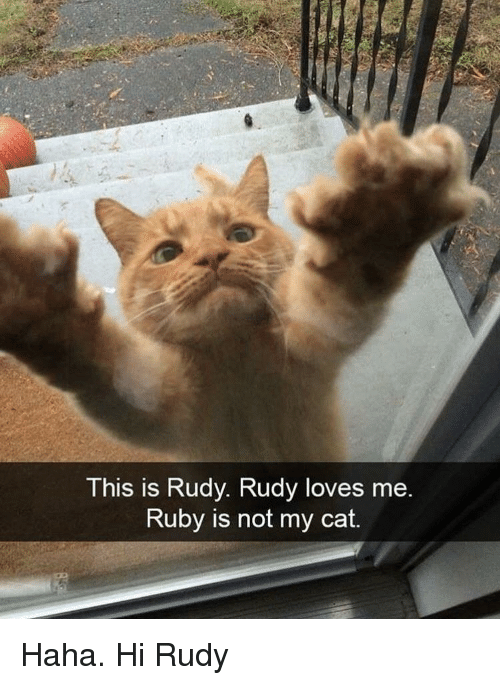Haha, Ruby, and Cat: This is Rudy. Rudy loves me  Ruby is not my cat. Haha. Hi Rudy
