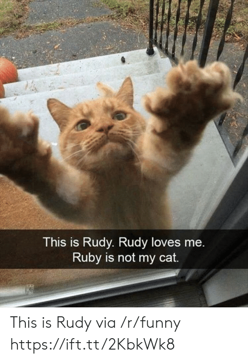 Funny, Ruby, and Cat: This is Rudy. Rudy loves me.  Ruby is not my cat. This is Rudy via /r/funny https://ift.tt/2KbkWk8