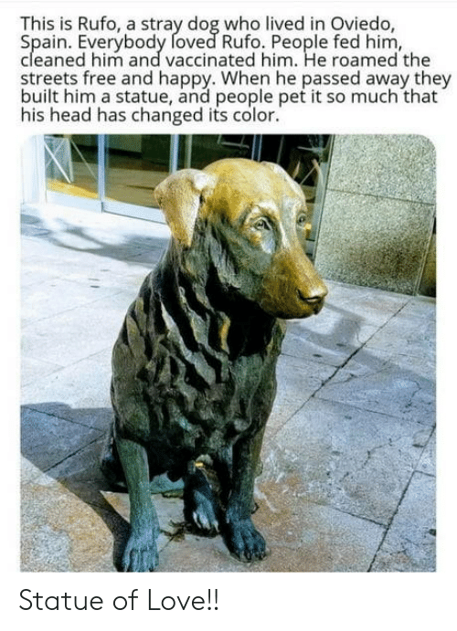 Head, Love, and Streets: This is Rufo, a stray dog who lived in Oviedo,  Spain. Everybody foved Rufo. People fed him,  cleaned him and vaccinated him. He roamed the  streets free and happy. When he passed away they  built him a statue, and people pet it so much that  his head has changed its color. Statue of Love!!