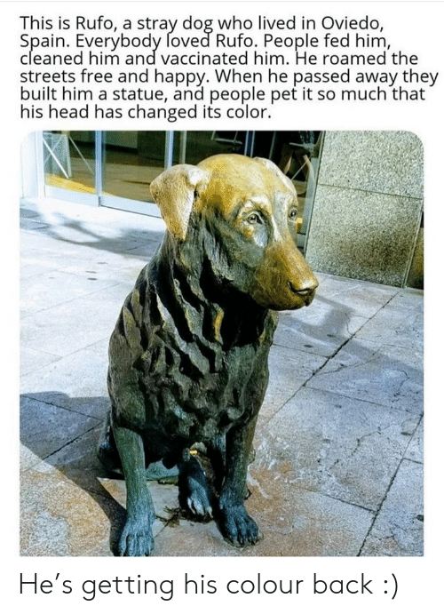 Passed Away: This is Rufo, a stray dog who lived in Oviedo,  Spain. Everybody foved Rufo. People fed him,  cleaned him and vaccinated him. He roamed the  streets free and happy. When he passed away they  built him a statue, and people pet it so much that  his head has changed its color. He's getting his colour back :)