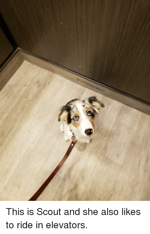 elevators: This is Scout and she also likes to ride in elevators.