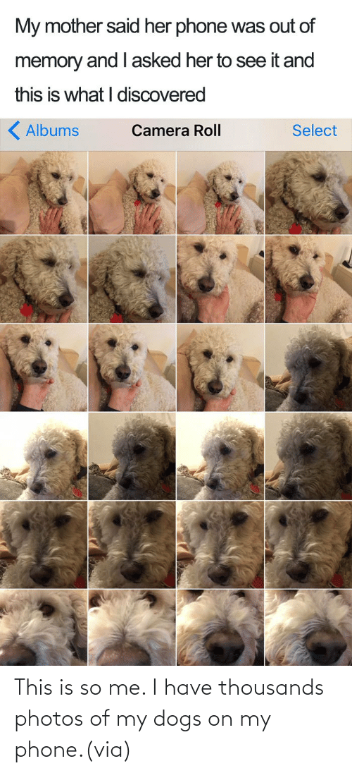 Thousands: This is so me. I have thousands photos of my dogs on my phone.(via)