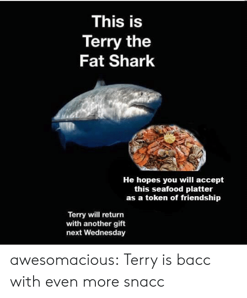 Tumblr, Shark, and Blog: This is  Terry the  Fat Shark  He hopes you will accept  this seafood platter  as a token of friendship  Terry will return  with another gift  next Wednesday awesomacious:  Terry is bacc with even more snacc
