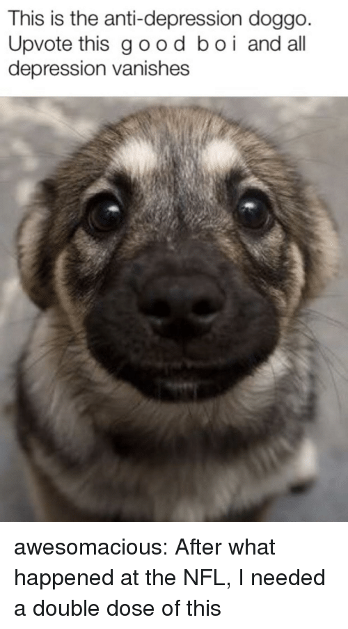 Nfl, Tumblr, and Blog: This is the anti-depression doggo  Upvote this good boi and all  depression vanishes awesomacious:  After what happened at the NFL, I needed a double dose of this
