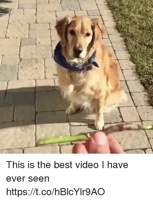 Best Video: This is the best video I have ever seen https://t.co/hBlcYlr9AO