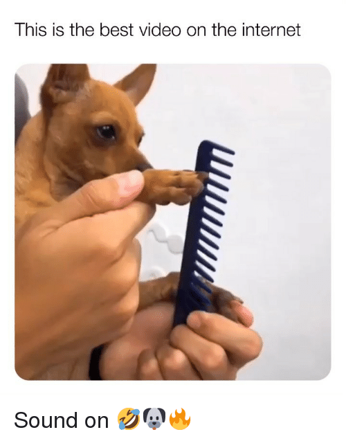 Best Video: This is the best video on the internet Sound on 🤣🐶🔥