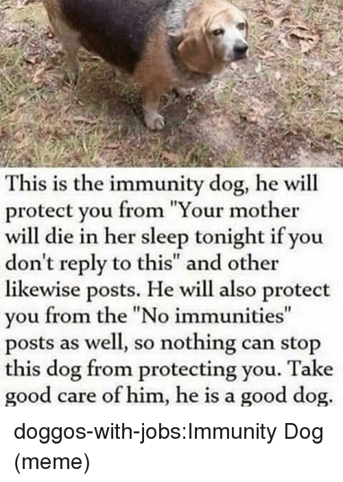 "Dog Meme: This is the immunity dog, he will  protect you from ""Your mother  will die in her sleep tonight if you  don't reply to this"" and other  likewise posts. He will also protect  vou from the ""No immunities  posts as well, so nothing can stop  this dog from protecting you. Take  good care of him, he is a good dog  It doggos-with-jobs:Immunity Dog (meme)"