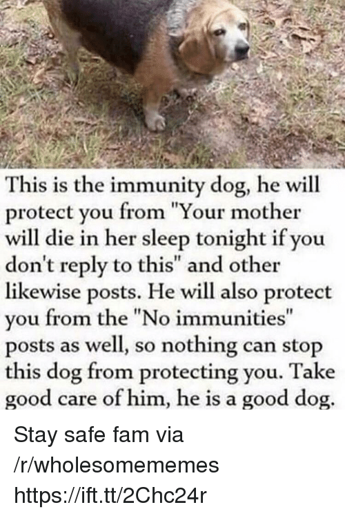 """Fam, Good, and Sleep: This is the immunity dog, he will  protect you from """"Your mother  will die in her sleep tonight if you  don't reply to this"""" and other  likewise posts. He will also protect  you from the """"No immunities  posts as well, so nothing can stop  this dog from protecting you. Take  good care of him, he is a good dog Stay safe fam via /r/wholesomememes https://ift.tt/2Chc24r"""