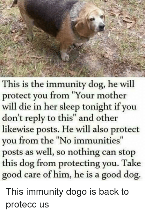 """Good, Sleep, and Back: This is the immunity dog, he will  protect you from """"Your mother  will die in her sleep tonight if you  don't reply to this"""" and other  likewise posts. He will also protect  you from the """"No immunities""""  posts as well, so nothing can stop  this dog from protecting you. Take  good care of him, he is a good dog. This immunity dogo is back to protecc us"""