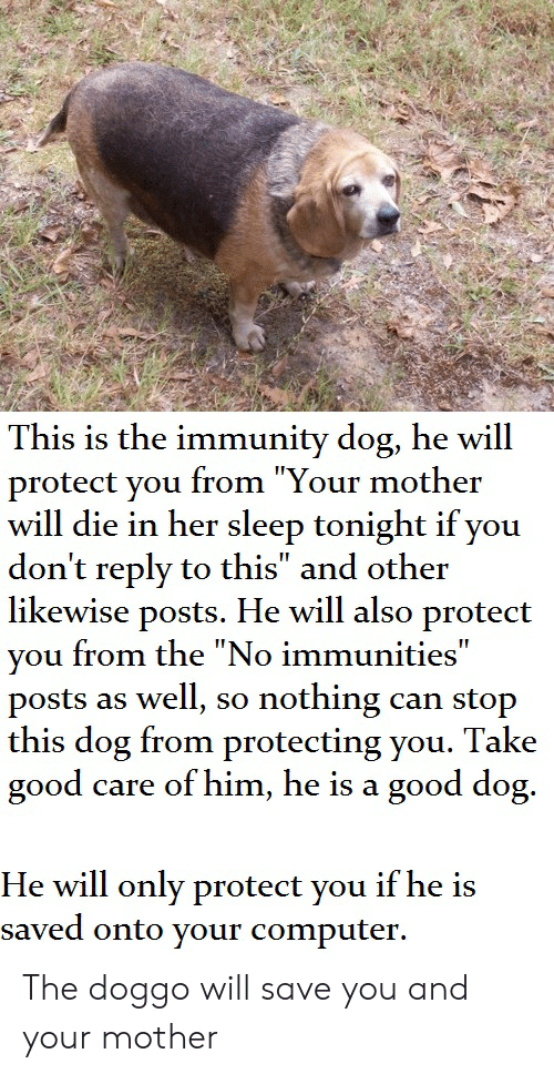 "Reddit, Computer, and Good: This is the immunity dog, he will  protect you from ""Your mother  will die in her sleep tonight if you  don't reply to this"" and other  likewise posts. He will also protect  you from the ""No immunities""  posts as well, so  this dog from protecting you. Take  good  nothing  can stop  care of him, he is a good dog.  He will only protect you if he is  saved onto your computer. The doggo will save you and your mother"