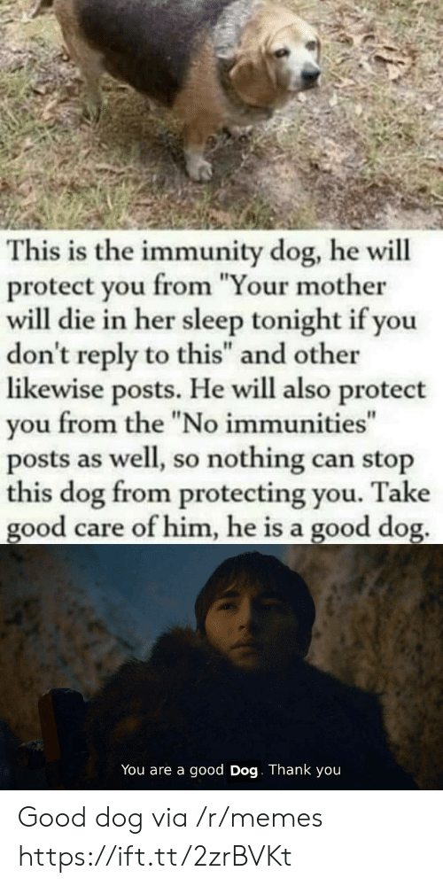 """Your Mother: This is the immunity dog, he will  protect you from """"Your mother  will die in her sleep tonight if you  don't reply to this"""" and other  likewise posts. He will also protect  from the """"No immunities""""  you  posts as well, so nothing can stop  this dog from protecting you.  good care of him, he is a good dog.  Take  You are a good Dog. Thank you Good dog via /r/memes https://ift.tt/2zrBVKt"""