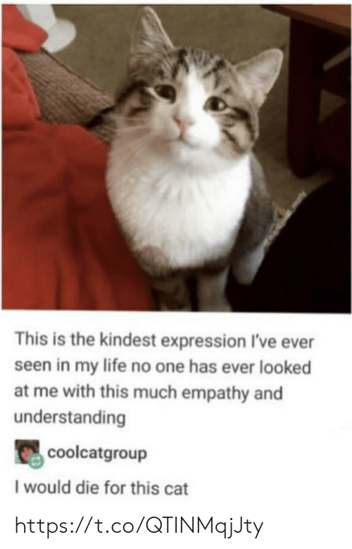 Life, Memes, and Empathy: This is the kindest expression I've ever  seen in my life no one has ever looked  at me with this much empathy and  understanding  coolcatgroup  I would die for this cat https://t.co/QTINMqjJty