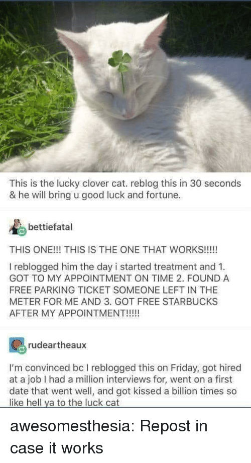 Friday, Starbucks, and Tumblr: This is the lucky clover cat. reblog this in 30 seconds  & he will bring u good luck and fortune.  bettiefatal  THIS ONE!!! THIS IS THE ONE THAT WORKS!!!!!  I reblogged him the day i started treatment and 1  GOT TO MY APPOINTMENT ON TIME 2. FOUND A  FREE PARKING TICKET SOMEONE LEFT IN THE  METER FOR ME AND 3. GOT FREE STARBUCKS  AFTER MY APPOINTMENT!!!  rudeartheaux  I'm convinced bc I reblogged this on Friday, got hired  at a job I had a million interviews for, went on a first  date that went well, and got kissed a billion times so  like hell ya to the luck cat awesomesthesia:  Repost in case it works