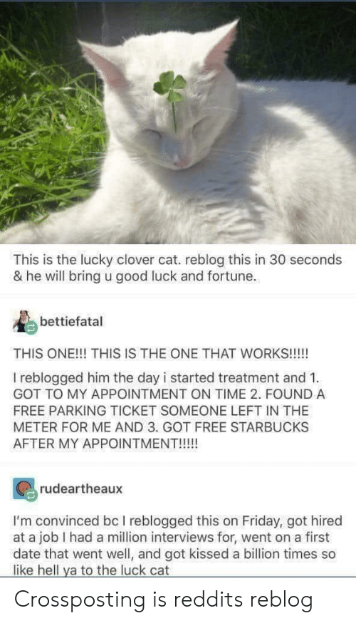 Reddits: This is the lucky clover cat. reblog this in 30 seconds  & he will bring u good luck and fortune.  bettiefatal  THIS ONE!!! THIS IS THE ONE THAT WORKS!!!!!  I reblogged him the day i started treatment and 1  GOT TO MY APPOINTMENT ON TIME 2. FOUND A  FREE PARKING TICKET SOMEONE LEFT IN THE  METER FOR ME AND 3. GOT FREE STARBUCKS  AFTER MY APPOINTMENT!!!  rudeartheaux  I'm convinced bc I reblogged this on Friday, got hired  at a job I had a million interviews for, went on a first  date that went well, and got kissed a billion times so  like hell ya to the luck cat Crossposting is reddits reblog