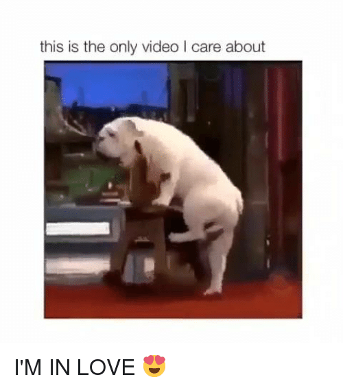 Dank, Love, and Video: this is the only video I care about I'M IN LOVE 😍
