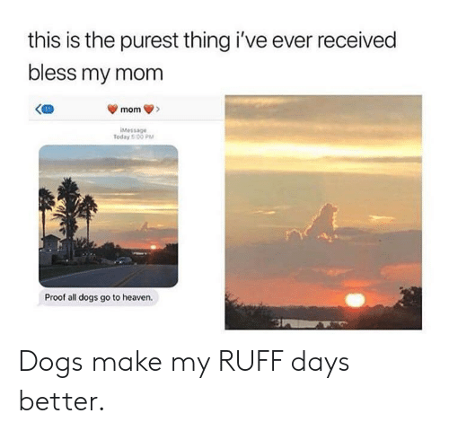 Dogs, Heaven, and All Dogs Go to Heaven: this is the purest thing i've ever received  bless my mom  Message  Today 5 00 PM  Proof all dogs go to heaven. Dogs make my RUFF days better.