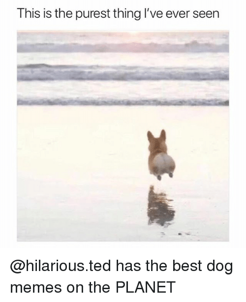 Funniest Meme On The Planet : This is the purest thing l ve ever seen has best dog