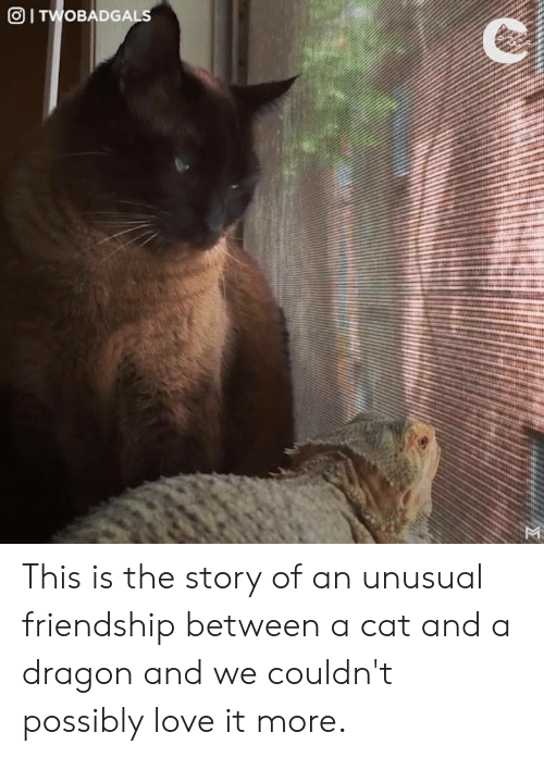Love, Memes, and Friendship: This is the story of an unusual friendship between a cat and a dragon and we couldn't possibly love it more.