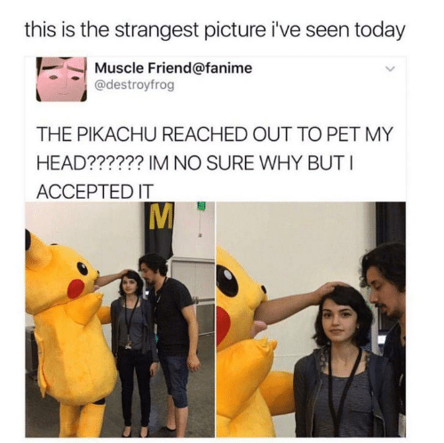 Accepted: this is the strangest picture i've seen today  Muscle Friend@fanime  @destroyfrog  THE PIKACHU REACHED OUT TO PET MY  HEAD?????? IM NO SURE WHY BUT I  ACCEPTED IT