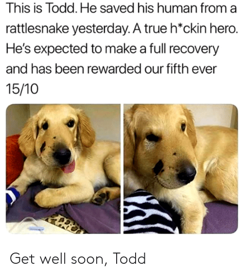 Soon..., True, and Been: This is Todd. He saved his human from a  rattlesnake yesterday. A true h*ckin hero.  He's expected to make a full recovery  and has been rewarded our fifth ever  15/10 Get well soon, Todd
