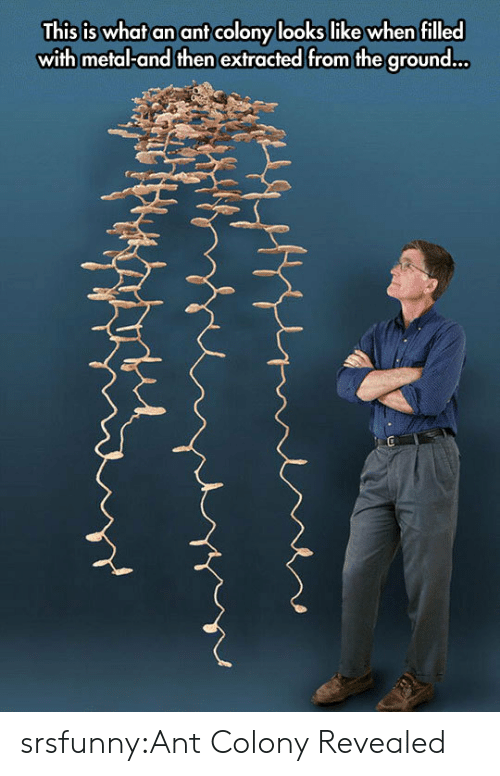 Tumblr, Blog, and Http: This is what an ant colony looks like when filled  with metal-and then extracted from the ground... srsfunny:Ant Colony Revealed