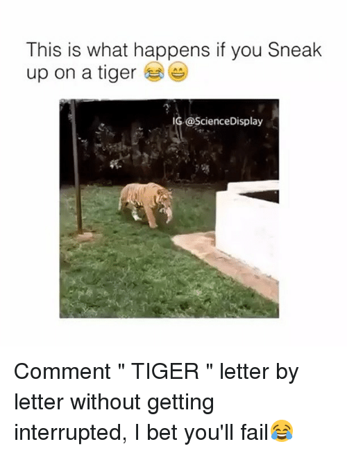 "Fail, I Bet, and Memes: This is what happens if you Sneak  up on a tiger  IG@ScienceDisplay Comment "" TIGER "" letter by letter without getting interrupted, I bet you'll fail😂"