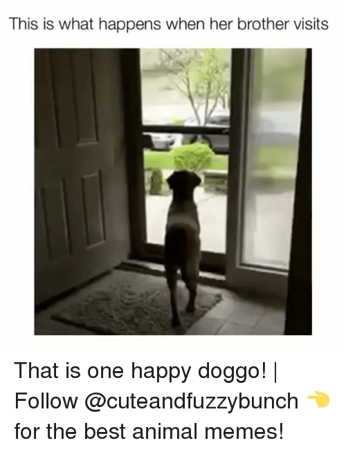 Memes, Animal, and Best: This is what happens when her brother visits That is one happy doggo! | Follow @cuteandfuzzybunch 👈 for the best animal memes!