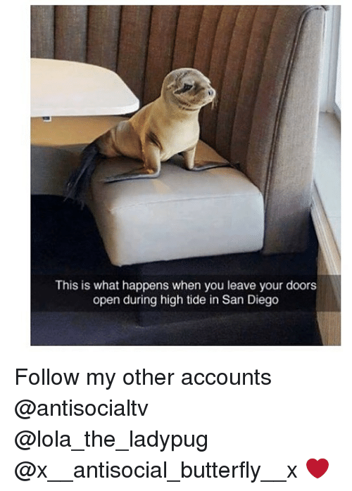 Memes, Butterfly, and San Diego: This is what happens when you leave your doors  open during high tide in San Diego Follow my other accounts @antisocialtv @lola_the_ladypug @x__antisocial_butterfly__x ❤️