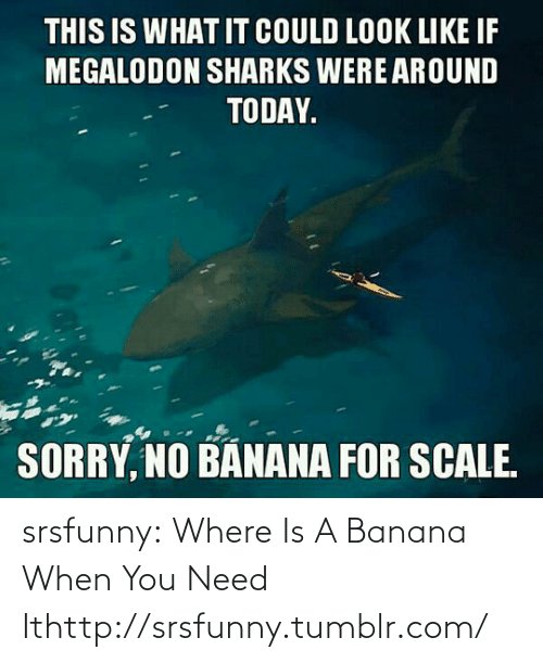 megalodon: THIS IS WHAT IT COULD LOOK LIKE IF  MEGALODON SHARKS WERE AROUND  TODAY.  SORRY, NO BANANA FOR SCALE. srsfunny:  Where Is A Banana When You Need Ithttp://srsfunny.tumblr.com/