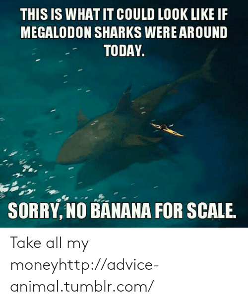 Take All My Money: THIS IS WHAT IT COULD LOOK LIKE IF  MEGALODON SHARKS WERE AROUND  TODAY.  SORRY, NO BANANA FOR SCALE. Take all my moneyhttp://advice-animal.tumblr.com/