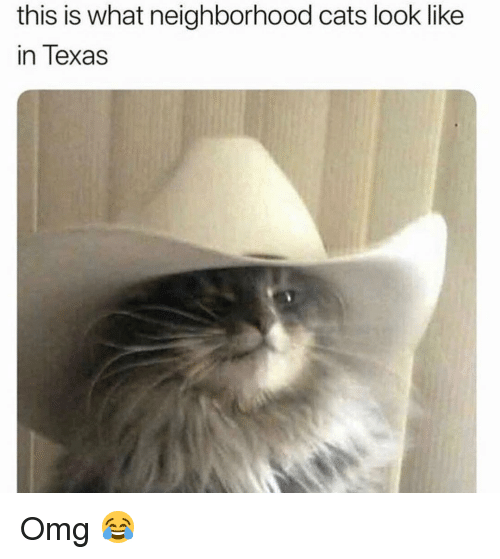 Cats, Memes, and Omg: this is what neighborhood cats look like  in Texas Omg 😂